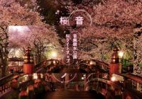 東京都北区・音無親水公園にて初の桜ライトアップイベント開催